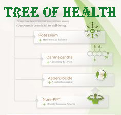 noni-tree-health-benefits