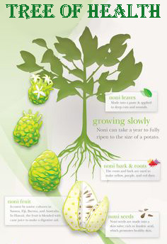 noni-tree-of-health